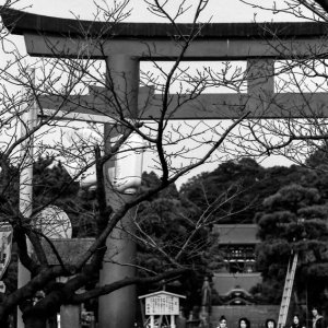 People in front of Torii
