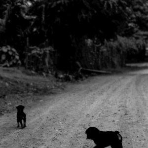 砂利道を往く二匹の犬