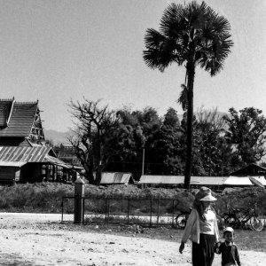 椰子の木と親子