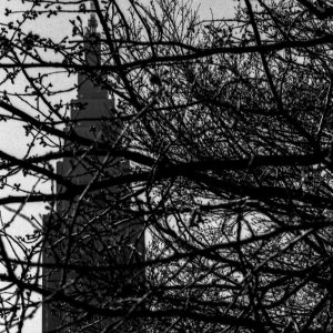 Building towering on the other side of tree branches
