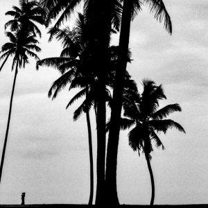 椰子と椰子の間の小さなシルエット