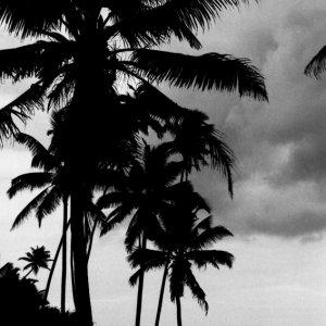 椰子の木の下のシルエット