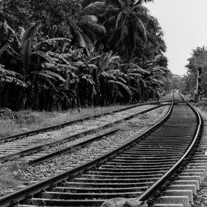 線路を横断する猫