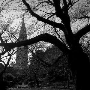 木々の向こうに見えるドコモタワー