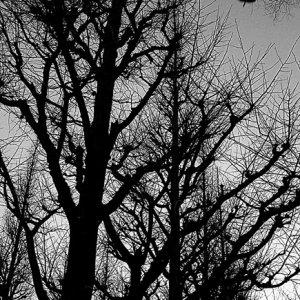 並木の上を飛ぶ鳥