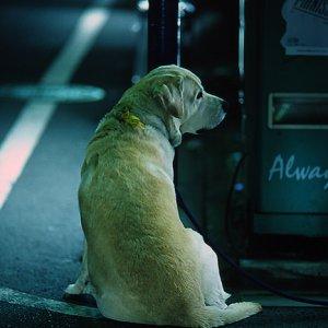 ご主人を待つ犬