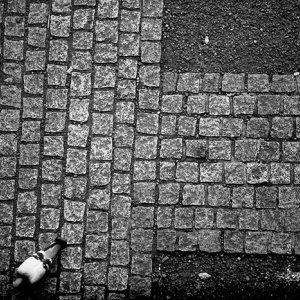 Pigepn walking