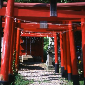 Red small Torii
