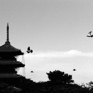 Pagoda and birds
