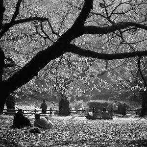 木の下で寝転ぶ人たち