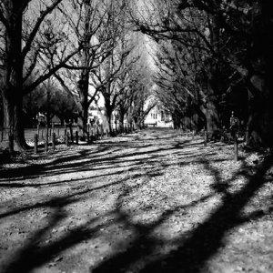 誰もいない並木道