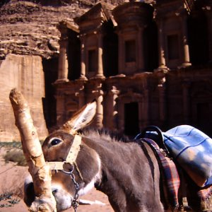 donkey and Ad Deir in Petra