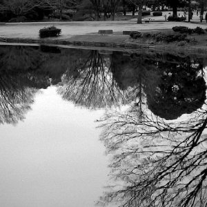 Trees reflected on pond