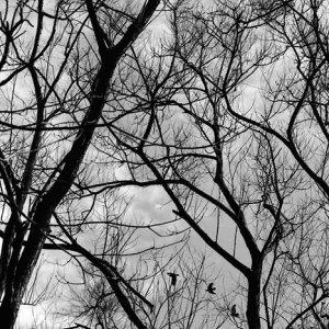 木々の向こうに見える鳥