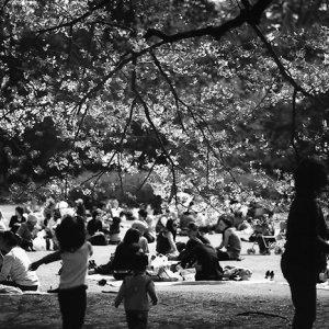 ピクニックを楽しむ人々
