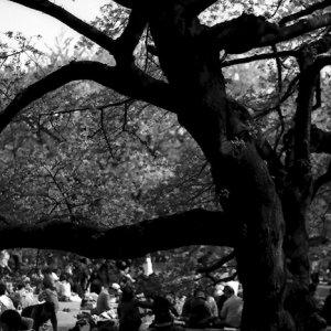 樹の下でピクニックしている男の子