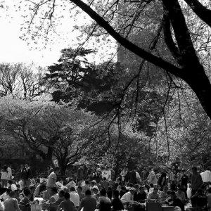桜の下の人混み