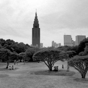 Tree shades in Shinjuku Gyoen Park