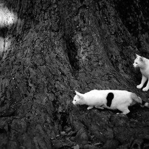 何かを見詰める猫