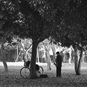 saxophonist playing in tree shade
