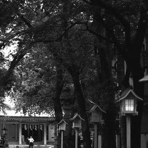 赤城神社の参道