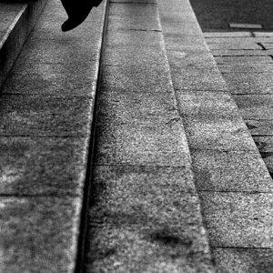 観音堂に向かう四本の脚