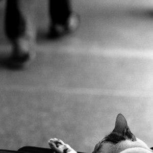 Cat filled with a feeling of weariness