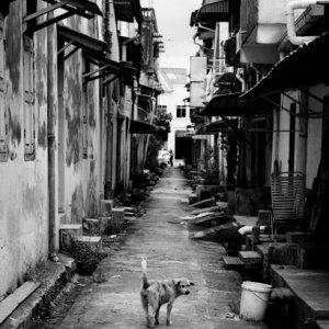 人気のない路地で振り返る犬
