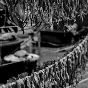 紐の上で干されている烏賊