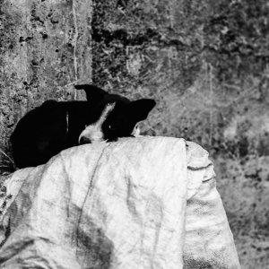 モノクロの犬の昼寝