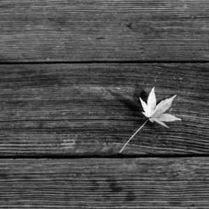 木のベンチの上のもみじの葉