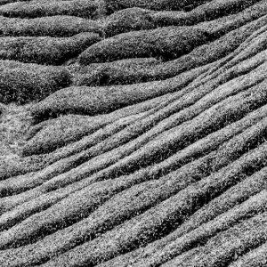 丘陵地帯の斜面を埋め尽くす茶畑