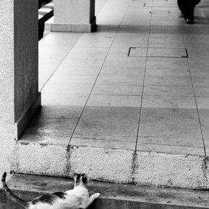 Cat watching passage
