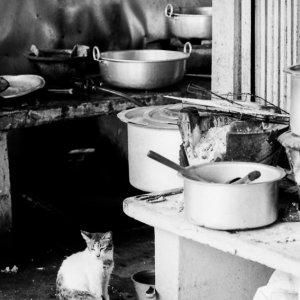 Cat sitting in kitchen