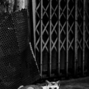 路地で寝そべる猫
