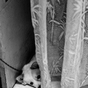 覗き見る犬
