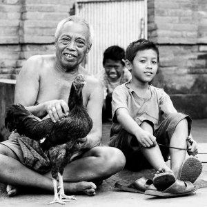 老人と男の子と猛々しい雄鶏