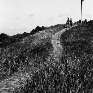 椰子の木へ通ずる道