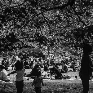 新宿御苑でピクニックを楽しむ人々