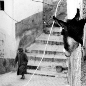 女を見詰める驢馬