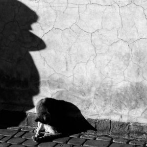 Shadow of boy and cat