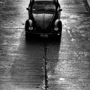 Beetle running in Tuxtla Gutiérrez
