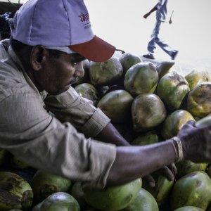 Man choosing coconut