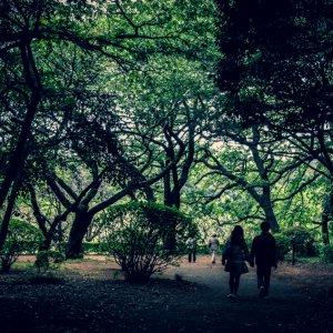 木立の中のカップル