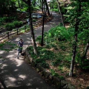 林試の森公園の小径