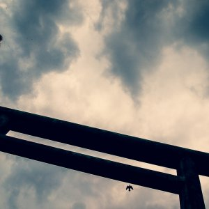 Torii and bird