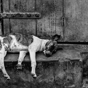 Dog sleeping like dead
