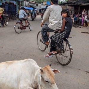 道の真中の牛