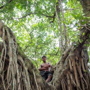 Boy standing on tree