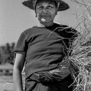 Farmer carrying straw